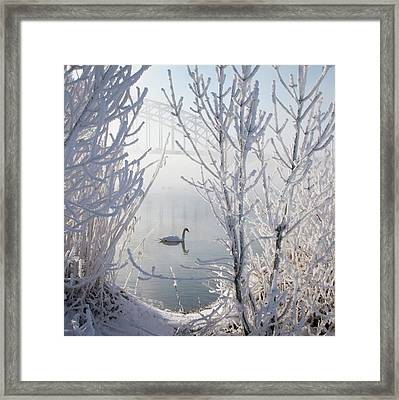 Winter Swan Framed Print by E.M. van Nuil