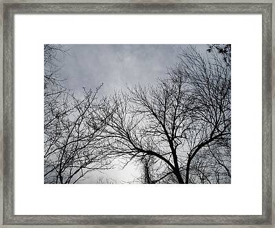 Winter Tree II Framed Print by Suzanne Fenster