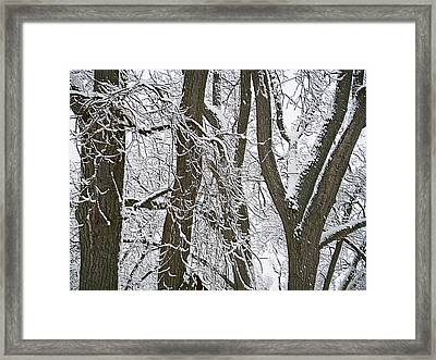 Winter Trees  Framed Print by Aimee L Maher Photography and Art Visit ALMGallerydotcom