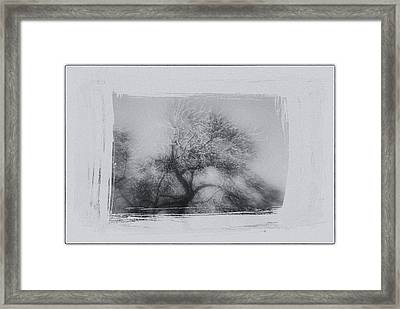 Winter Trees Framed Print by David Ridley