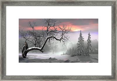 Winter Trees Framed Print by Igor Zenin