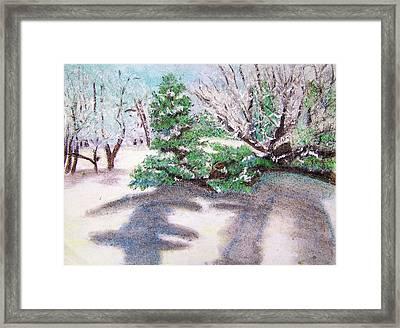 Winter Trees Framed Print by Katina Cote