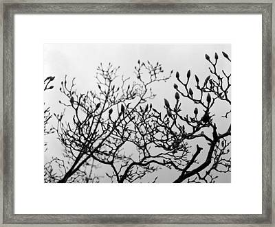 Framed Print featuring the photograph Winter Trees by Luis Esteves