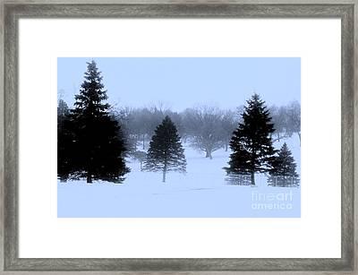 Winter Trees Framed Print by Marsha Heiken