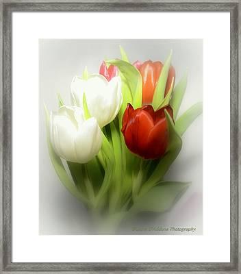 Winter Tulips Framed Print by Laura DAddona