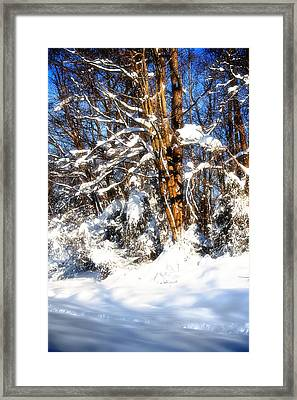 Winter Wanderland Framed Print by Michael Putnam