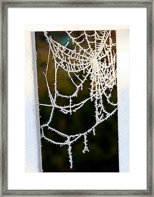 Winter Web Framed Print by Paula Tohline Calhoun