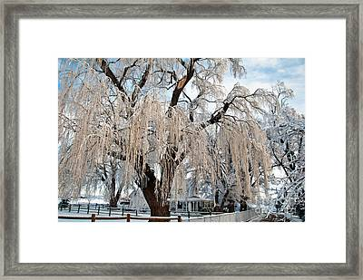 Winter Willow Framed Print by Harry Strharsky