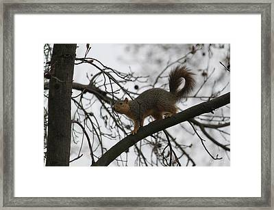 Framed Print featuring the photograph Winter Wonderland  by Amy Gallagher