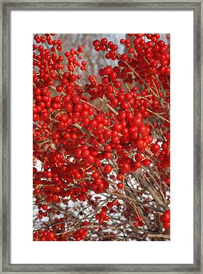 Winterberries Framed Print