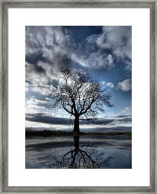 Wintering Oak Tree Framed Print