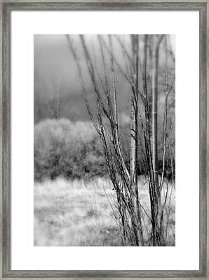 Framed Print featuring the photograph Winters Branch by Kathleen Grace