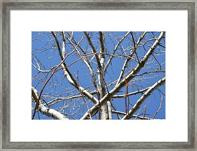 Winter's Branches Framed Print by Naomi Berhane