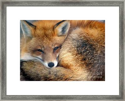 Winter's Chill Framed Print