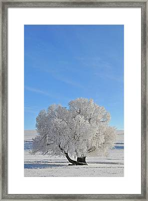 Winter's Coat In Montana's Gallatin Valley Framed Print