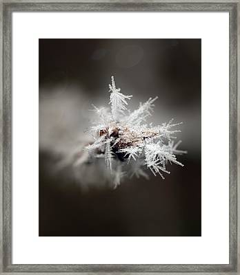 Winters Frost Framed Print