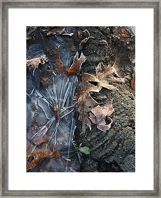 Winter's Grasp Framed Print by Pamela Turner
