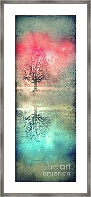 Winter's Reds And Blues Framed Print by Tara Turner
