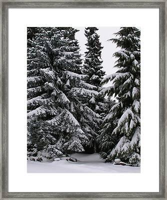 Winters Silence Framed Print