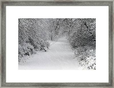 Framed Print featuring the photograph Winter's Trail by Elizabeth Winter