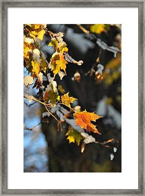 Wintery Pigment Framed Print by JAMART Photography