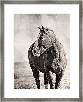 Wintery Ranch Horse Framed Print by Megan Chambers