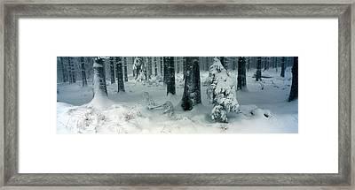 Wintry Fir Forest Framed Print by Ulrich Kunst And Bettina Scheidulin