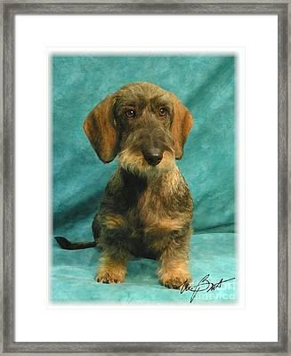 Wire Dachshund Pup Framed Print by Maxine Bochnia