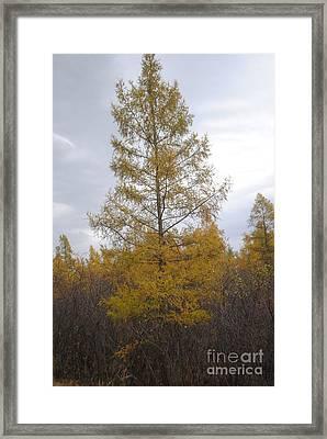 Wiscon Autumn Marsh Framed Print by Mia Hopkins