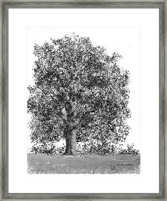Wisconsin-sugar Maple Framed Print