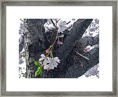 Wisdom Strength And Protection II Framed Print by Rotaunja