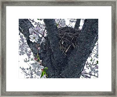 Wisdom Strength And Protection Framed Print by Rotaunja