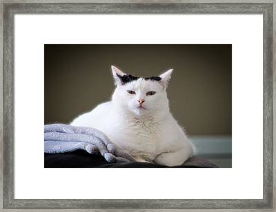 Framed Print featuring the photograph Wise Cat by JM Photography