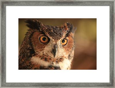 Framed Print featuring the photograph Wise Old Owl by Doug McPherson