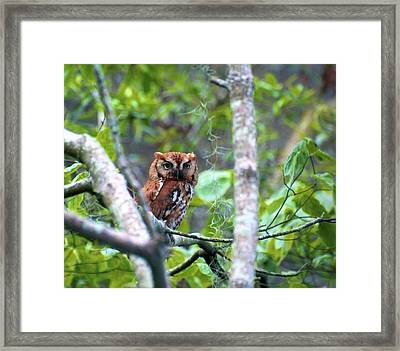 Wise Young Owl Framed Print