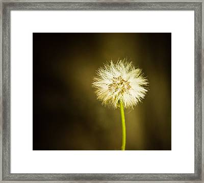 Wishes Framed Print by Sara Frank
