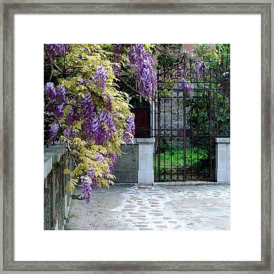 Wisteria And Gate In Venice Italy Framed Print