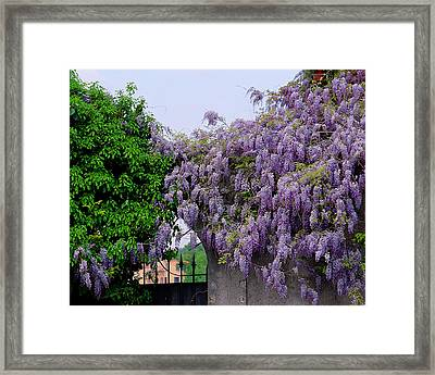 Wisteria And Gate In Verona Italy Framed Print
