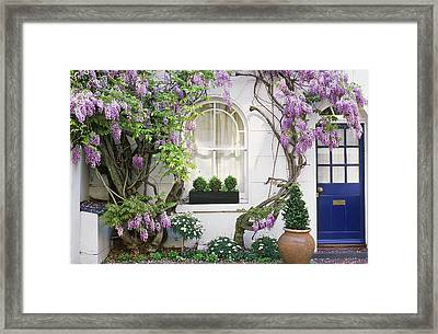 Wisteria Climbing Up Wall Of House With Window Box Framed Print by Linda Burgess