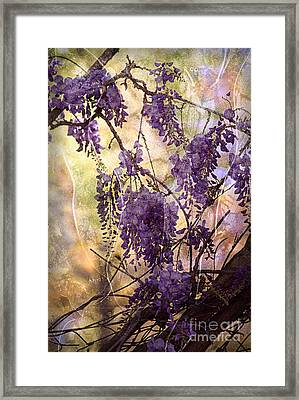 Wisteria Lane Framed Print