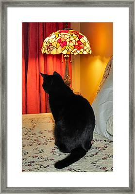 Witches Cat Framed Print by Art Dingo