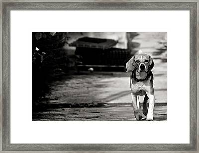 With No Fear Framed Print
