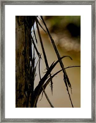 With Wings Unfurling Framed Print by Odd Jeppesen