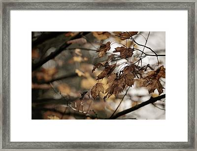 Withered Leaves Framed Print