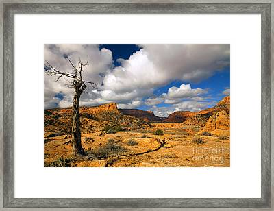 Withered Framed Print by Mike  Dawson