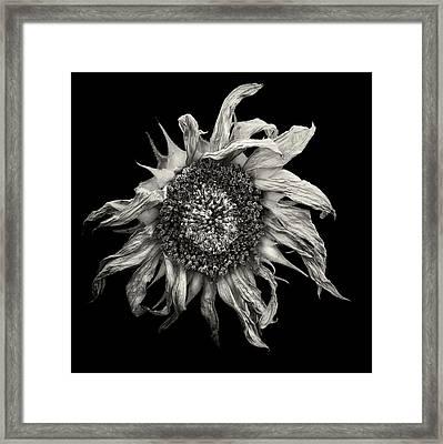 withered Sun  Framed Print by Jaromir Hron
