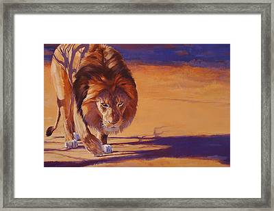Within Striking Distance - African Lion Framed Print by Shawn Shea