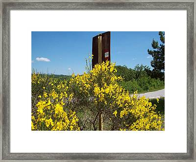 Within The Mountains On June Framed Print by Davide Barbanera
