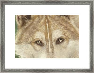 Wolf Eyes Framed Print by Teresa LeClerc
