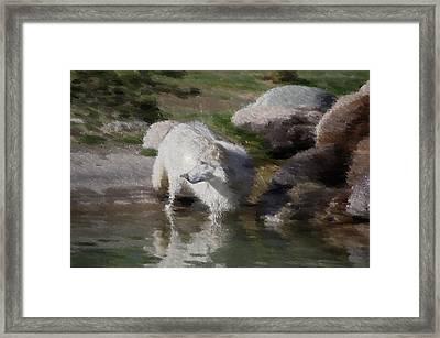 Wolf Framed Print by Kevin Bone